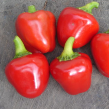 button to buy organic pepperdew seeds