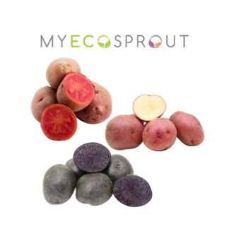 Rich results on Google's SERP when searching for 'My Eco Sprout'